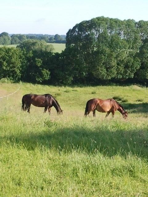 Die Pferde leben artgerecht in einer Herde.