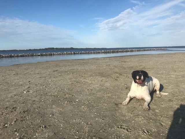Hundenstrand auf 1km