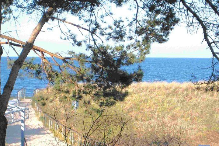 Blick vom Haus zum Ostseestrand