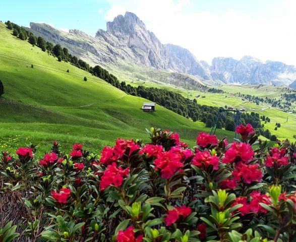Die Dolomiten und Ihre Farbenpracht
