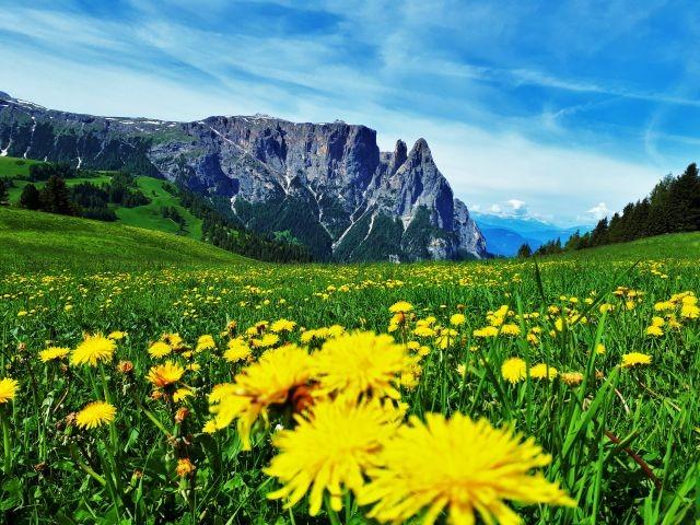 Frühling auf der Seiser Alm