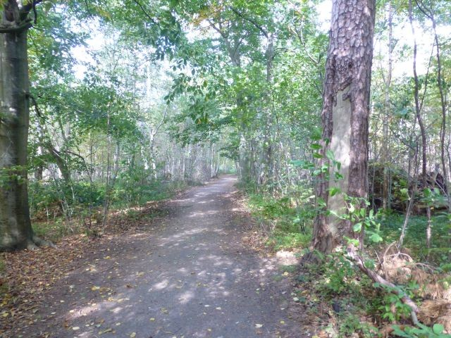 durch den Wald immer geradeaus zum Strand / Grenzweg