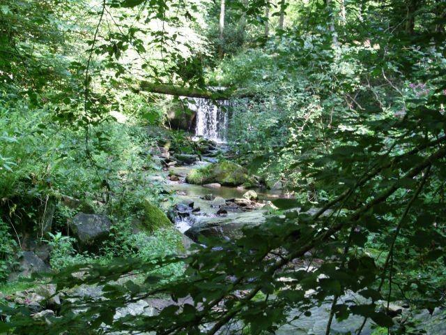 Naturschutzgebiet Kohlbachmühle bei Obernzell, für schöne Hundespaziergänge, 3 km entfernt