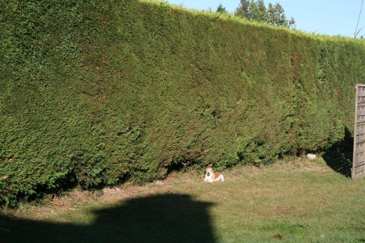 der super eingezäunte Garten
