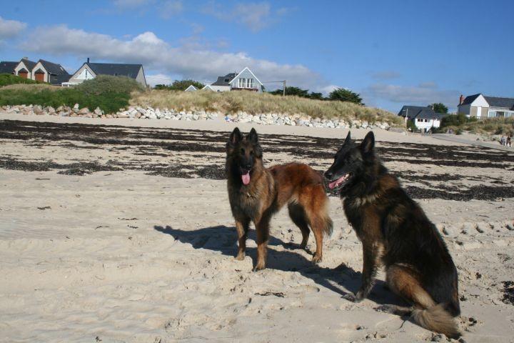 Hunde sind willkommen - Appartement Normandie