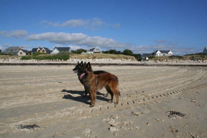 viel Platz zum Toben und Spielen am Strand