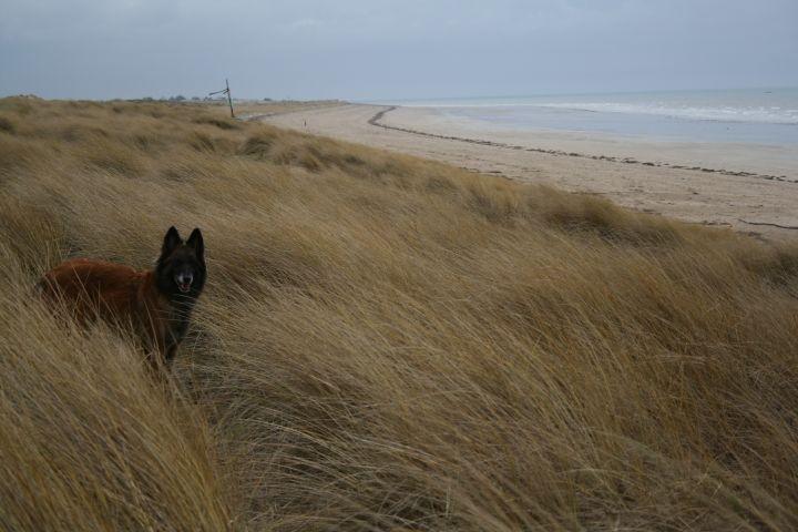 Hundestrände in der Normandie