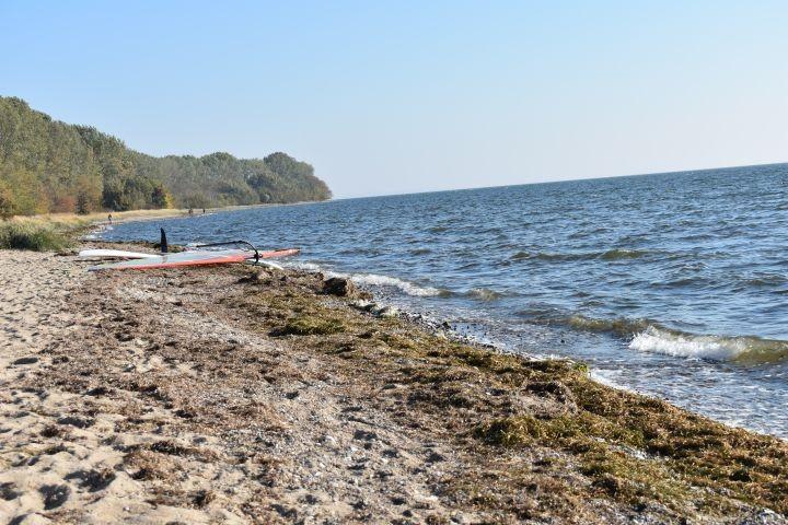 Strand Palmer Ort