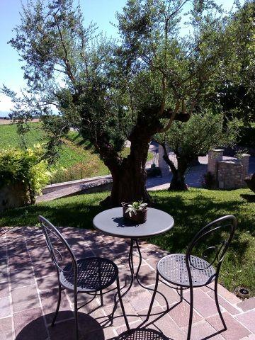 .. unter dem Olivenbaum...