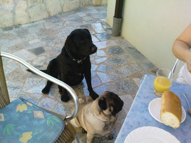 Frühstück -Bleki und Gästehund Bepo