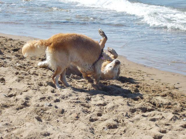 neue Strandfreundschaften...Wieso bist Du so nass?