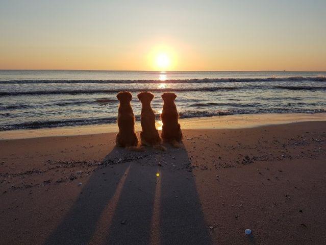 sie genießen  den Sonnenaufgang