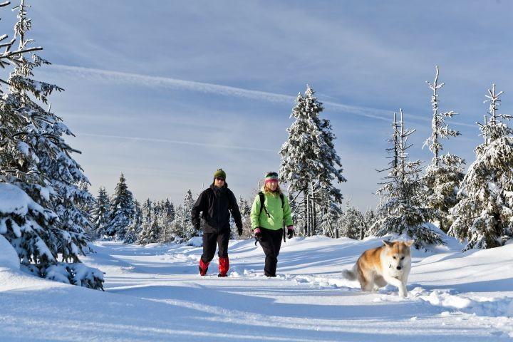 Winterspaziergang mit hrem Vierbeinigen Freund