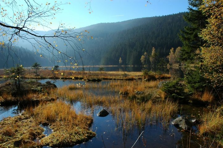 Natur Pur am Kleinen Arbersee