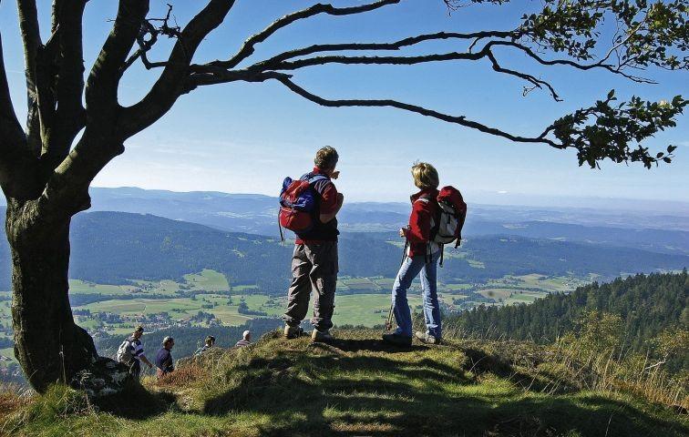 Wandern auf dem Kaitersberg