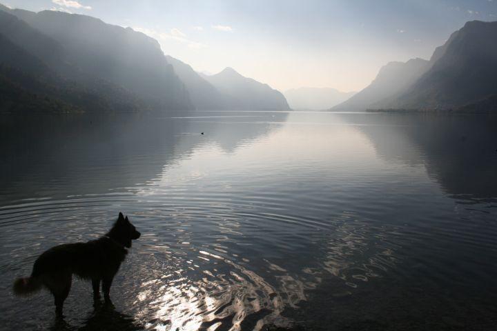 Hunde willkommen am Idrosee