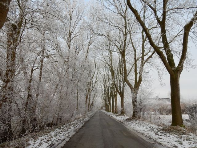 Winter in Leybuchtpolder