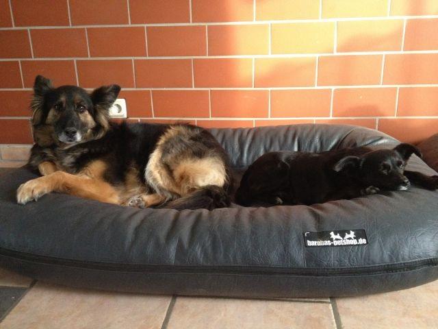 bequeme Hundebetten