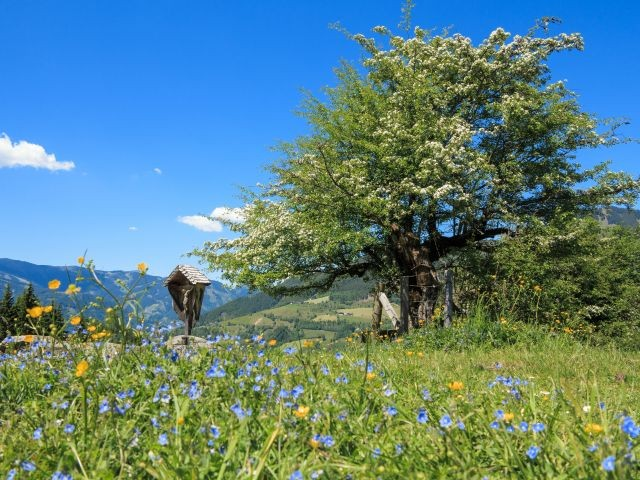 Frühling im Pinzgau