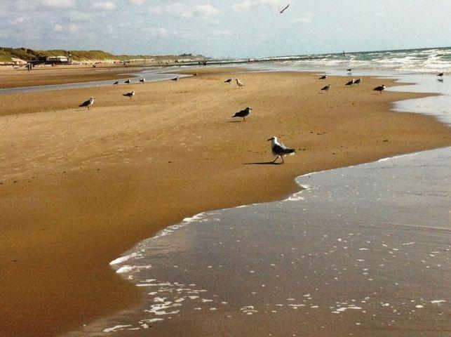 der kilometerlange Strand bei Camperduin