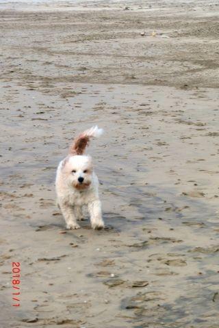Die Hunden können freilaufen am Hundestrand ( s. gesonderte Informationen)