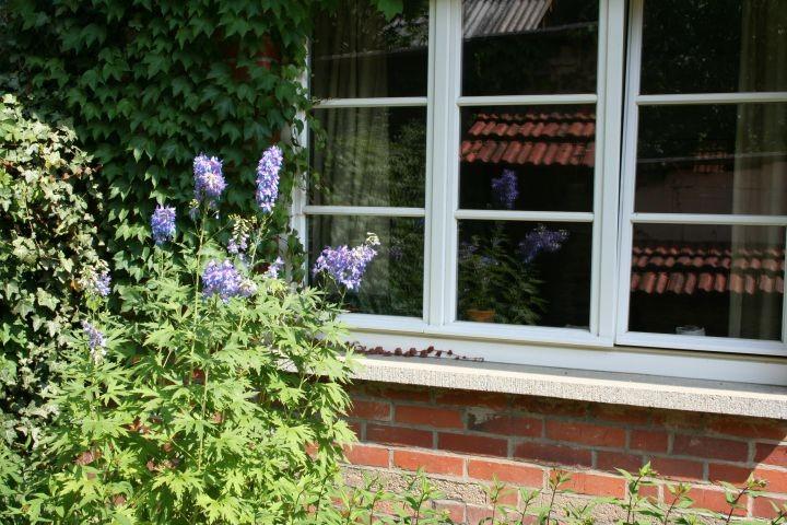 Wohnzimmerfenster