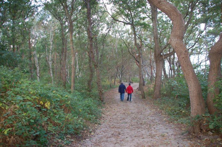 Der große Stadtwald beginnt direkt hinter der Ferienwohnung (ideal zum Gassigehen)