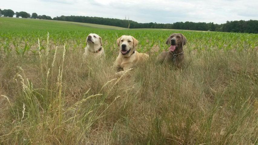 durch die Wiesen streifen mit der Hundebetreuung