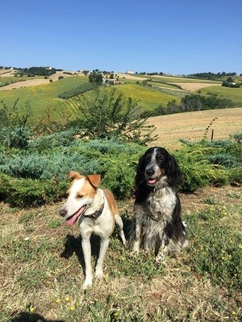 Unsere Hund Maila und Siri