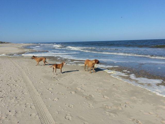 ein Paradies für Hunde
