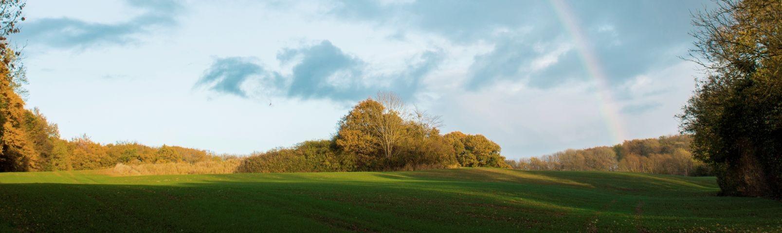 Wiesen und Wald um Gintoftholm