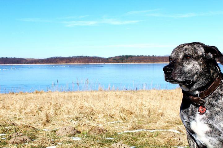 Perfekte Umgebung für Spaziergänge mit dem Hund