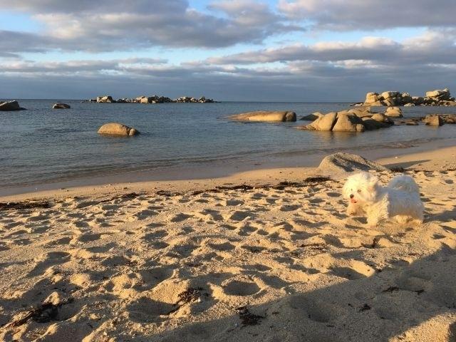 Unser Hund am Strand!