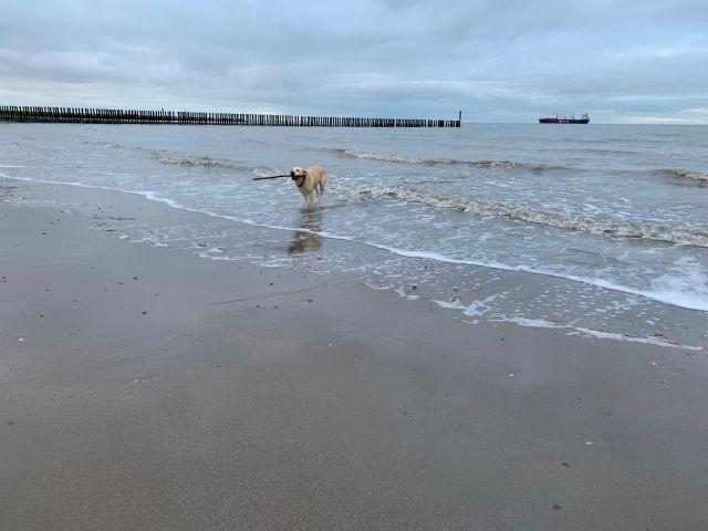 Ein Traum für Wasserhunde