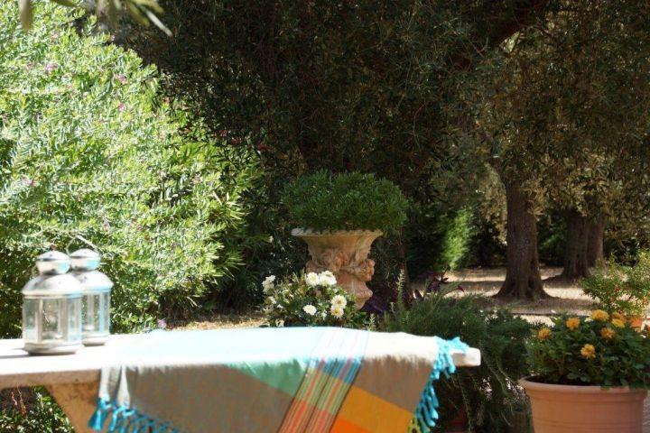Blick in den Olivengarten