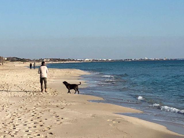 Spaziergang mit Hund am Strand