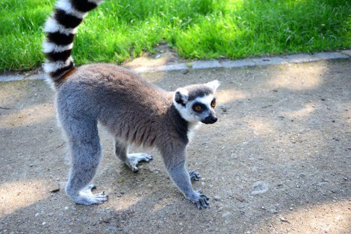 Zoo Wismar