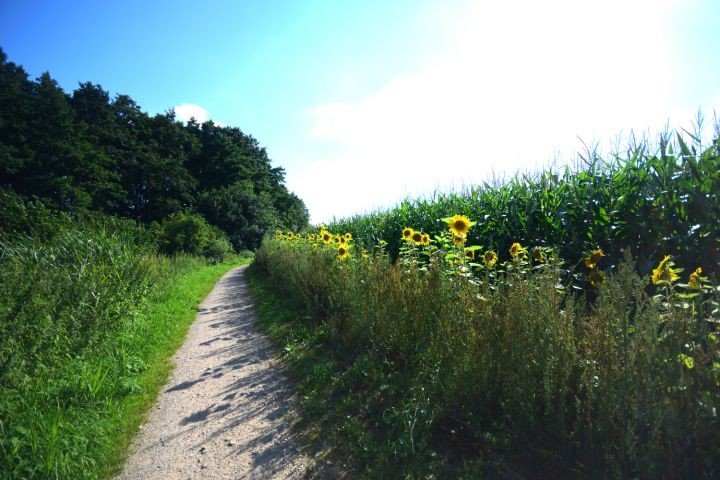 Tolle Rad- und Wanderwege durch die Natur