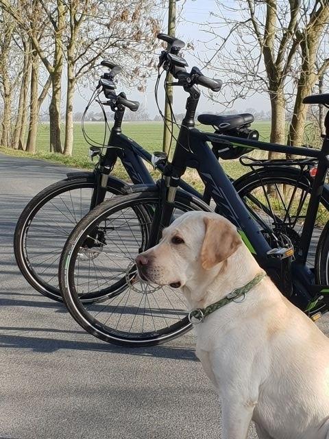 E-Bike und Hund