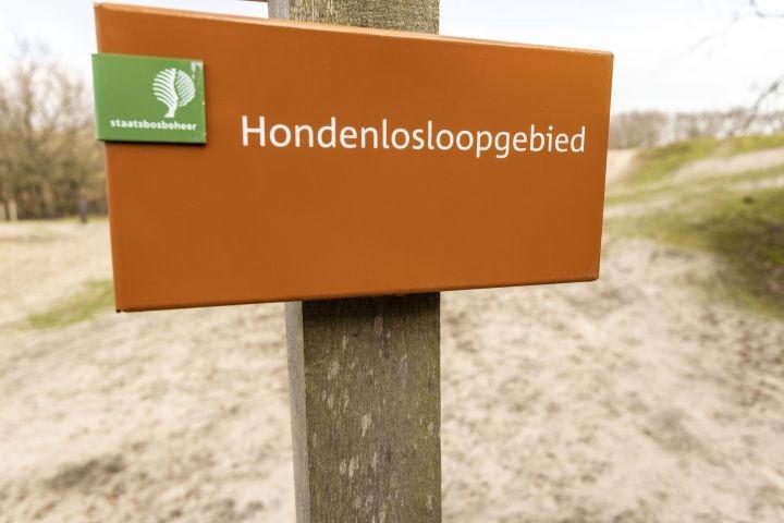 Hunde-Freilaufgebiet in den Dünen, ganzjährig