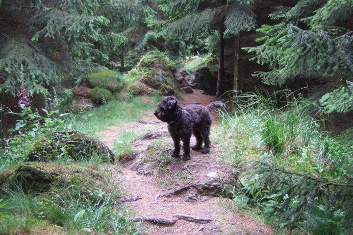 Wie im Märchenwald: Auf dem Rothaarsteig  in ca. 2 km Entfernung