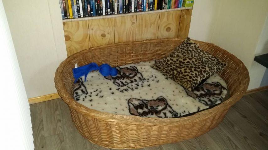 Hundebett im Wohnzimmer