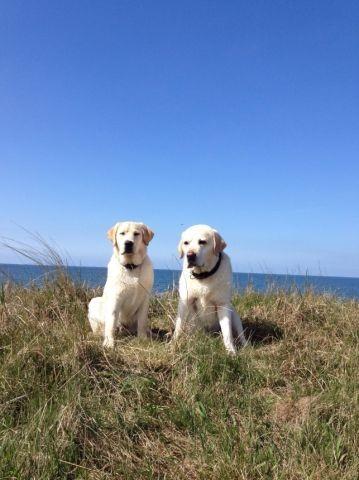 Glückliche Hunde unserer Gäste