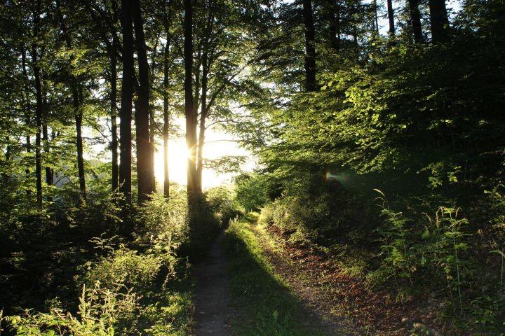 Der Waldweg in direkter Nähe der Häuser am Wald