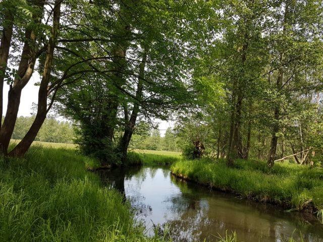 Spreewaldfließe laden zum Paddeln ein
