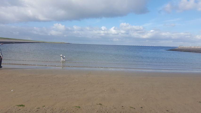 kleiner Strand von Stavenisse ca 1km zu Fuß