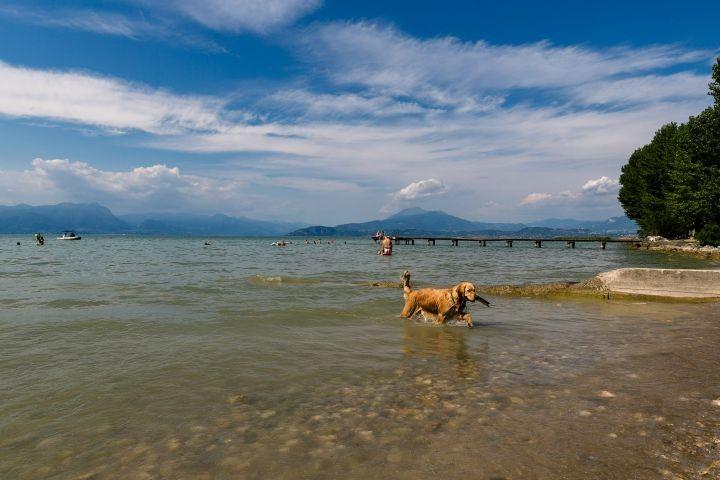 Unsere Hündin Lea genießt das spielen am Wasser