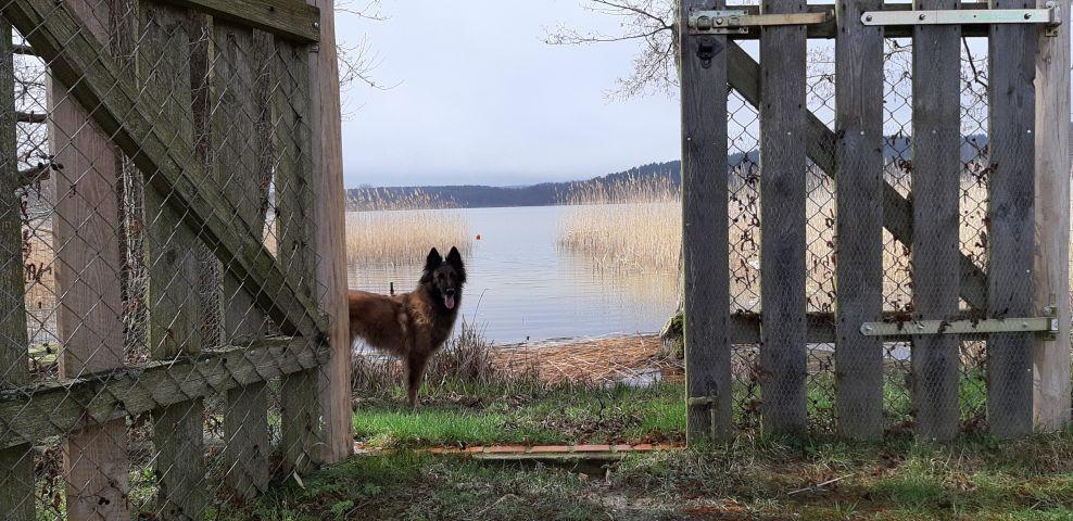direkter Zugang zum See