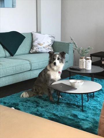 Maja fühlt sich im Wohnzimmer sehr wohl