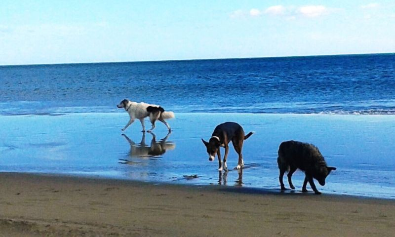 Hunde am Strand von Narbonne-Plage
